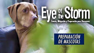 Ir a YouTube: Preparación de Mascotas para la Temporada de Huracanes(en inglés)